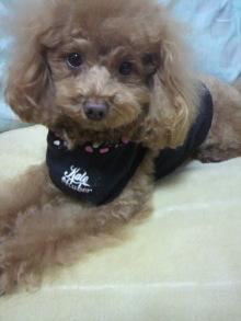 愛犬鈴ちゃん~トイプードル☆ライフスタイル~-2012012923050001.jpg