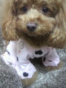 愛犬鈴ちゃん~トイプードル☆ライフスタイル~-2012020119280000.jpg