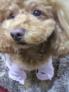 愛犬鈴ちゃん~トイプードル☆ライフスタイル~-2012020119360001.jpg