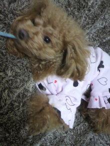 愛犬鈴ちゃん~トイプードル☆ライフスタイル~-2012020119340001.jpg