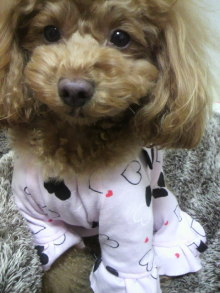 愛犬鈴ちゃん~トイプードル☆ライフスタイル~-2012020119380000.jpg