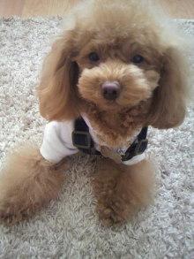 愛犬鈴ちゃん~トイプードル☆ライフスタイル~-2012020212000001.jpg