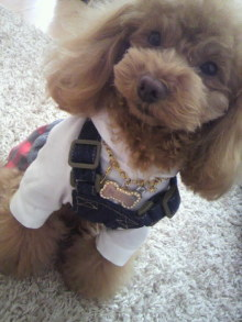 愛犬鈴ちゃん~トイプードル☆ライフスタイル~-2012020212030001.jpg