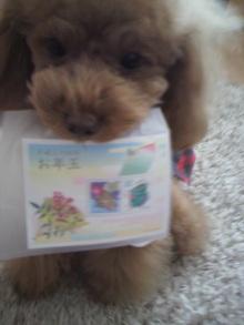 愛犬鈴ちゃん~トイプードル☆ライフスタイル~-2012020212000000.jpg