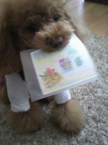 愛犬鈴ちゃん~トイプードル☆ライフスタイル~-2012020211590000.jpg
