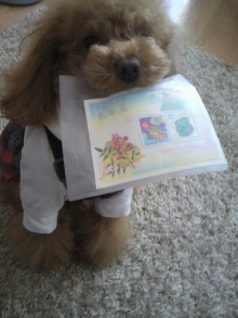 愛犬鈴ちゃん~トイプードル☆ライフスタイル~-2012020212020002.jpg