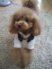 愛犬鈴ちゃん~トイプードル☆ライフスタイル~-2012020212020001.jpg