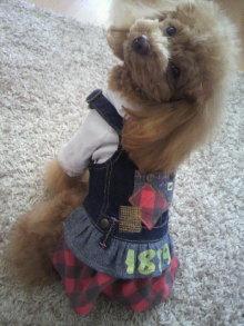愛犬鈴ちゃん~トイプードル☆ライフスタイル~-2012020212030000.jpg