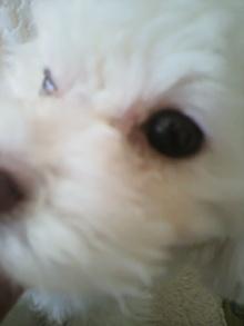愛犬鈴ちゃん~トイプードル☆ライフスタイル~-2012020309540000.jpg