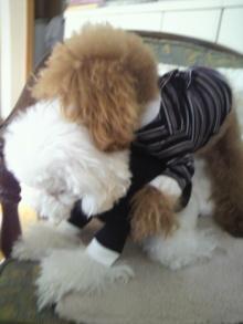 愛犬鈴ちゃん~トイプードル☆ライフスタイル~-2012020309570000.jpg
