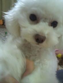 愛犬鈴ちゃん~トイプードル☆ライフスタイル~-2012020318390000.jpg