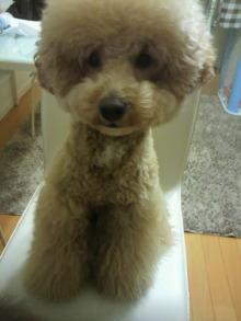 愛犬鈴ちゃん~トイプードル☆ライフスタイル~-2012020417150000.jpg