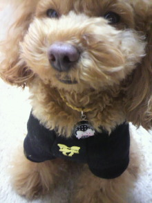 愛犬鈴ちゃん~トイプードル☆ライフスタイル~-2012020422080000.jpg
