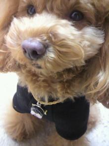 愛犬鈴ちゃん~トイプードル☆ライフスタイル~-2012020422100000.jpg