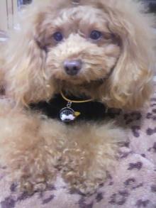 愛犬鈴ちゃん~トイプードル☆ライフスタイル~-2012020814100000.jpg