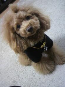 愛犬鈴ちゃん~トイプードル☆ライフスタイル~-2012020814180001.jpg