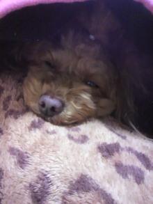 愛犬鈴ちゃん~トイプードル☆ライフスタイル~-2012020815080001.jpg