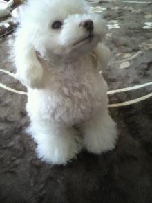 愛犬鈴ちゃん~トイプードル☆ライフスタイル~-2012020912290001.jpg