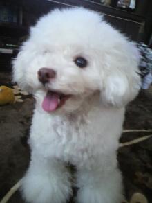 愛犬鈴ちゃん~トイプードル☆ライフスタイル~-2012020913050000.jpg