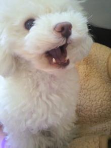 愛犬鈴ちゃん~トイプードル☆ライフスタイル~-2012021110120000.jpg