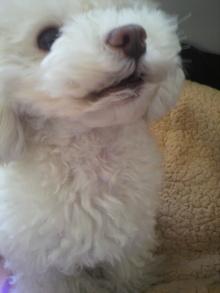 愛犬鈴ちゃん~トイプードル☆ライフスタイル~-2012021110120002.jpg