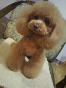 愛犬鈴ちゃん~トイプードル☆ライフスタイル~-2012021320550001.jpg