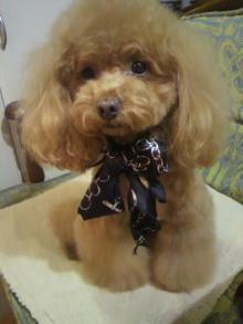 愛犬鈴ちゃん~トイプードル☆ライフスタイル~-2012021321000001.jpg
