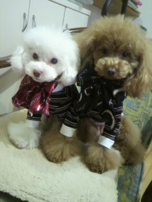 愛犬鈴ちゃん~トイプードル☆ライフスタイル~-2012021409160000.jpg