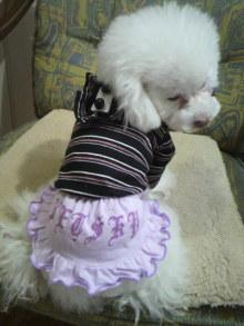 愛犬鈴ちゃん~トイプードル☆ライフスタイル~-2012021409140001.jpg