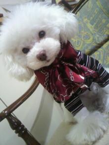 愛犬鈴ちゃん~トイプードル☆ライフスタイル~-2012021409150001.jpg