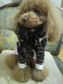 愛犬鈴ちゃん~トイプードル☆ライフスタイル~-2012021409130001.jpg