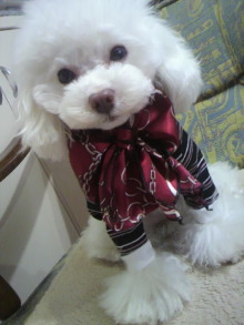 愛犬鈴ちゃん~トイプードル☆ライフスタイル~-2012021409150000.jpg