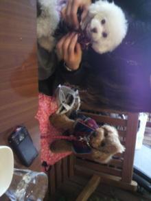 愛犬鈴ちゃん~トイプードル☆ライフスタイル~-2012021412010000.jpg