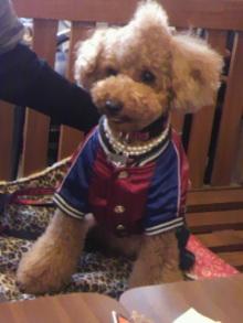 愛犬鈴ちゃん~トイプードル☆ライフスタイル~-2012021413120000.jpg