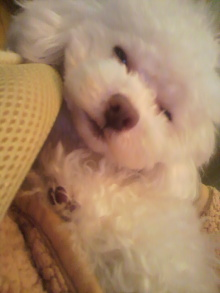 愛犬鈴ちゃん~トイプードル☆ライフスタイル~-2012021423010001.jpg