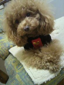 愛犬鈴ちゃん~トイプードル☆ライフスタイル~-2012021614260001.jpg