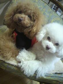 愛犬鈴ちゃん~トイプードル☆ライフスタイル~-2012021614280002.jpg