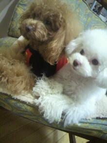 愛犬鈴ちゃん~トイプードル☆ライフスタイル~-2012021614290000.jpg