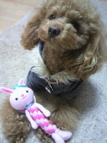愛犬鈴ちゃん~トイプードル☆ライフスタイル~-2012021818230000.jpg