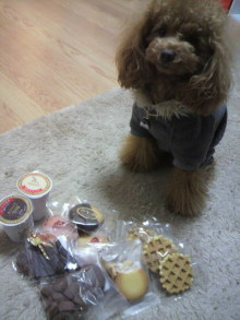 愛犬鈴ちゃん~トイプードル☆ライフスタイル~-2012021818250000.jpg