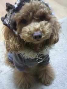 愛犬鈴ちゃん~トイプードル☆ライフスタイル~-2012021818270000.jpg