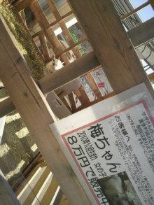 愛犬鈴ちゃん~トイプードル☆ライフスタイル~-2012022113150000.jpg