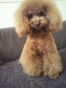 愛犬鈴ちゃん~トイプードル☆ライフスタイル~-2012022115550000.jpg