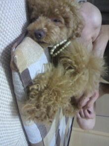 愛犬鈴ちゃん~トイプードル☆ライフスタイル~-2011070222150000.jpg