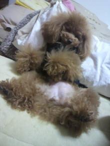 愛犬鈴ちゃん~トイプードル☆ライフスタイル~-2012022122590001.jpg