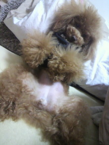 愛犬鈴ちゃん~トイプードル☆ライフスタイル~-2012022122590000.jpg