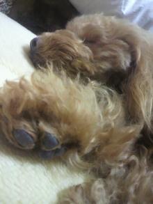 愛犬鈴ちゃん~トイプードル☆ライフスタイル~-2012022122530001.jpg