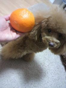 愛犬鈴ちゃん~トイプードル☆ライフスタイル~-2012030120110002.jpg
