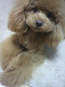愛犬鈴ちゃん~トイプードル☆ライフスタイル~-2012030117100002.jpg