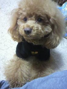 愛犬鈴ちゃん~トイプードル☆ライフスタイル~-2012030417450000.jpg